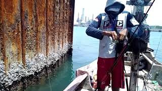 Download Mancing Baronang / Sadar ( Rabbitfish Fishing ) di Jenu Tuban Video