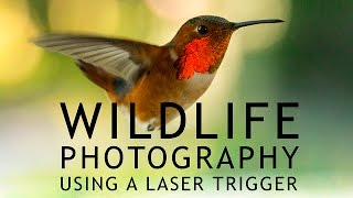 Download Wildlife Photography Using a Laser Trigger Video