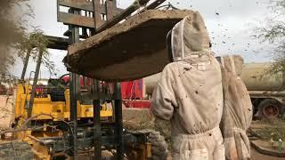 Download Boom Bees part 2 4K Video