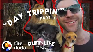 Download Lee Sneaks His 9 Dogs Into A Hotel — And Rescues 16 More | Ruff Life With Lee Asher Video