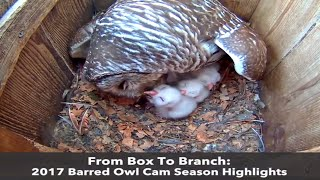 Download From Box To Branch: 2017 Barred Owl Cam Highlights Video