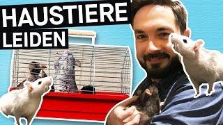 Download Haustiere in Gefahr: Käfige viel zu klein? So leiden eure Hamster!    PULS Reportage Video