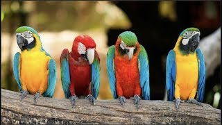 Download Cute Parrots Videos Compilation cute moment of the animals - Soo Cute! #7 Video