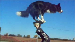 Download Nana the Border Collie Performs Amazing Dog Tricks Video