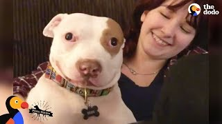 Download Pit Bull Dog Makes His Family Whole Again - BEAU | The Dodo Pittie Nation Video