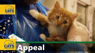 Download Cats Protection's Festive Feed 2017 Video