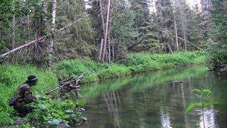 Download Рыбалка на таёжной речке #178 Video