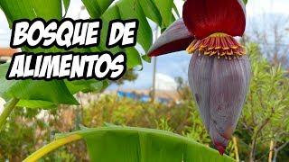 Download ⚠️ TRUCO PARA ABONAR EL BOSQUE DE ALIMENTOS 💩 | La Huerta de Ivan Video