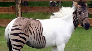 Download 18 Most Shocking Real Mutations In Animals Video