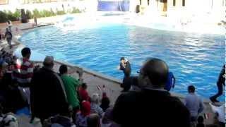 Download Wypadek z dzieckiem na pokazie delfinów - Egipt. Video