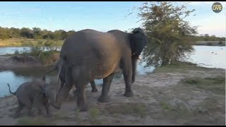 Download Safari Live : Elephants at the dam with a tiny calf this afternoon with Steve March 18, 2018 Video