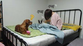 Download (감동)놀다가 급 자는 척 했더니 생각지도 못한 강아지 반응! Video