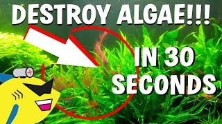 Download How To DESTROY Algae in 30 Seconds (Get Rid Of Aquarium Algae FAST) Video