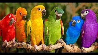 Download Parrots Majestic Birds Nature Documentary HD Video