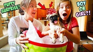 Download AYDAH GETS A SUPER SPECIAL PUPPY SURPRISE FOR CHRISTMAS!! Video