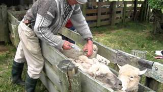 Download MVI 8885 Vaccins moutons Video