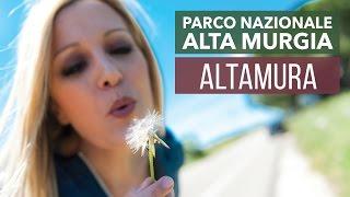 Download Cosa vedere, fare e mangiare ad Altamura, la città del pane (Italia) | Sabrina Merolla Vlog Video