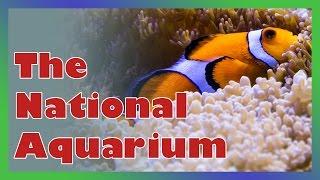 Download National Aquarium in Baltimore, MD in HD Video
