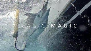 Download Pelagic Magic (Hawaii Fishing) Video