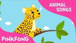 Download Cheetah Bang Bang   Cheetah   Animal Songs   Pinkfong Songs for Children Video