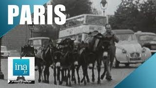 Download 1968 : Les ânes dans la circulation parisienne | Archive INA Video