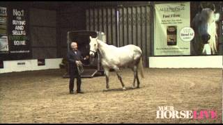 Download Preview of Richard Maxwell's Loading Demo | Your Horse Live 2012 Video