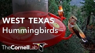 Download West Texas Hummingbirds, Sponsored by Perky-Pet® Video