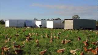 Download Pastured Range Egg Farming with Chicken Caravans Video