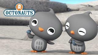 Download Octonauts: Cutest Creatures! Video