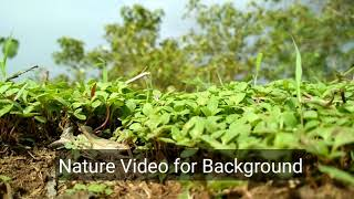 Download Superb Nature Video for Background HD Video