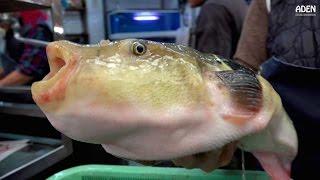 Download Fugu Sashimi - Street Food in Japan Video