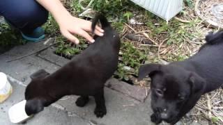 Download 路上餵可愛的流浪狗 Video