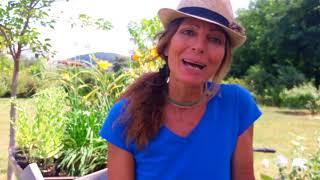 Download Erba della madonna e le sue proprietà curative Video