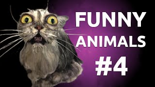 Download Best Funny Animals Compilation by FAILZONE | #4 Video