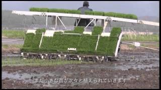 Download 大潟村田植え2015 Video
