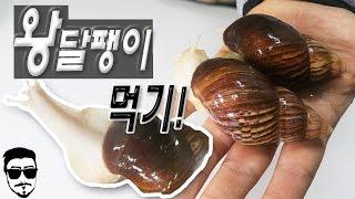 Download 왕 달팽이를 먹어보자!! 달팽이 요리 먹방!! Let's Eat a Giant Snail!! - [털쇼] Video