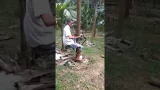 Download Bike riding on Coconut tree....😱 Video