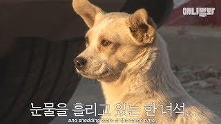 Download Dog in the video saying: ″I miss my mother these days...″ Video