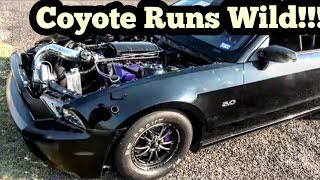 Download Turbo Coyote Mustang Runs Wild to the Field at Top End Race Video