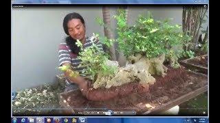 Download Peluang bisnis, budidaya bonsai beromzet puluhan juta rupiah Video