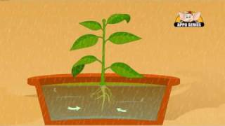 Download Learn about Plants in Hindi - Photosynthesis Video