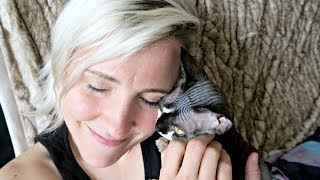 Download A Brief History of Hannah Hart (+ meet kitten Charles!) Video