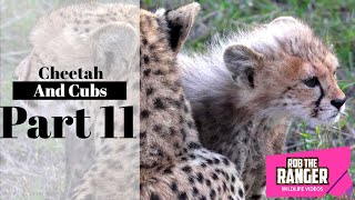 Download Cheetah And Cubs Part 11: With A Big Meal Video