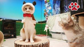 Download まやのトナカイコスプレ【瀬戸のまや日記】Cute cat Maya's in reindeer costume Cats room Miaou Video