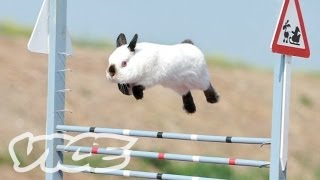 Download Cute Bunny Jumping Competition! Video
