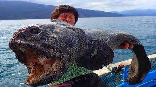 Download Most BIZARRE Creatures Ever Found! Video