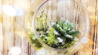 Download DIY Dollar Tree Snowy Succulent Terrarium Ornament - $4 Gift Idea - Christmas 2019 ❄️🌿 🎁 Video
