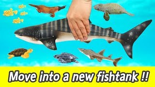 Download [EN] Let's move whaleshark into a new fishtank!! sea animal's names, kids english videoㅣCoCosToy Video