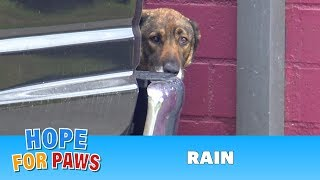 Download Homeless German Shepherd cries like a human! I have never heard anything like this!!! Video