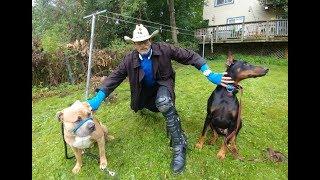 Download KING DOBERMAN MEETS BOSS PIT BULL SafeCalm Dog Whisperer BIG CHUCK MCBRIDE Video